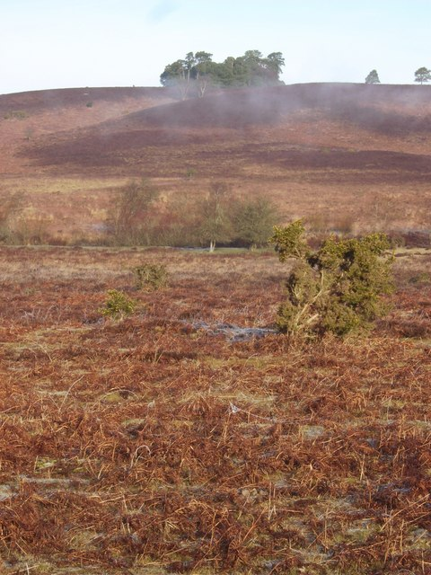 The New Forest, Digden Bottom