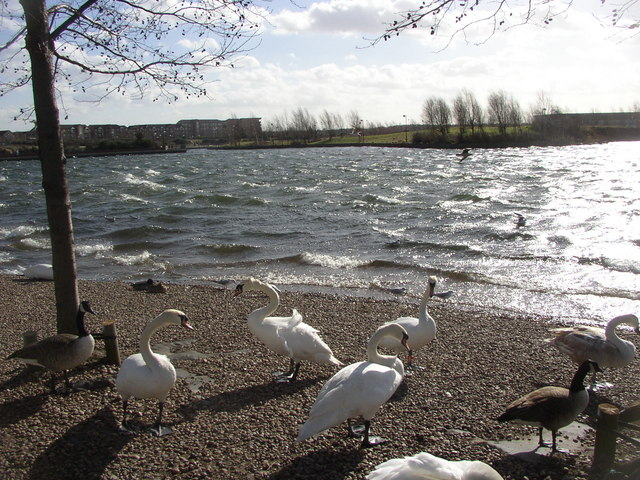 Ruffled feathers at the Lakeside