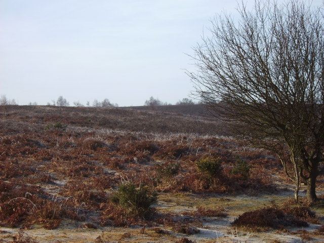 The New Forest, Red Shoot Plain