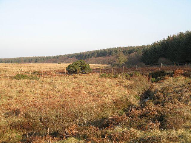 A moorland stream