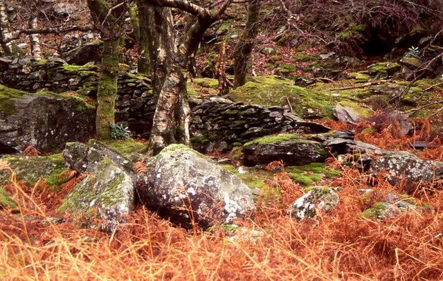 Mossy woodland along the Afon Glaslyn