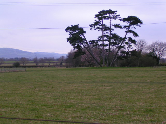 Trees in the grounds of South Park