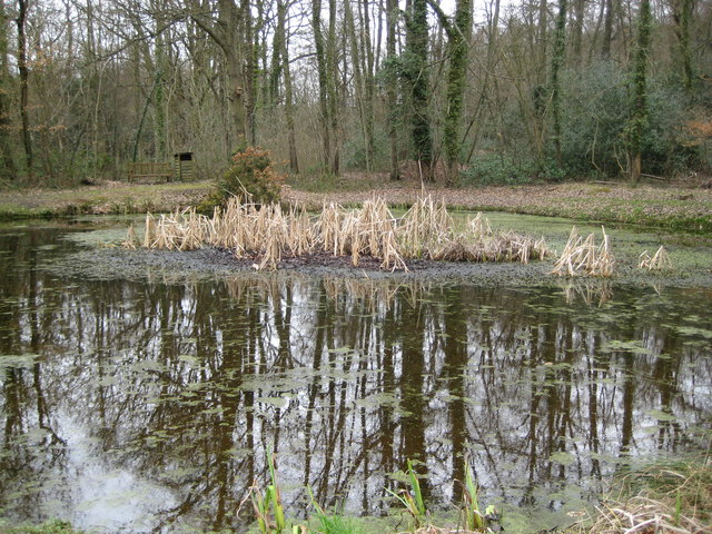 Hambledon: Pond by Vann Lane