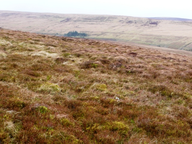 Mainly moorland
