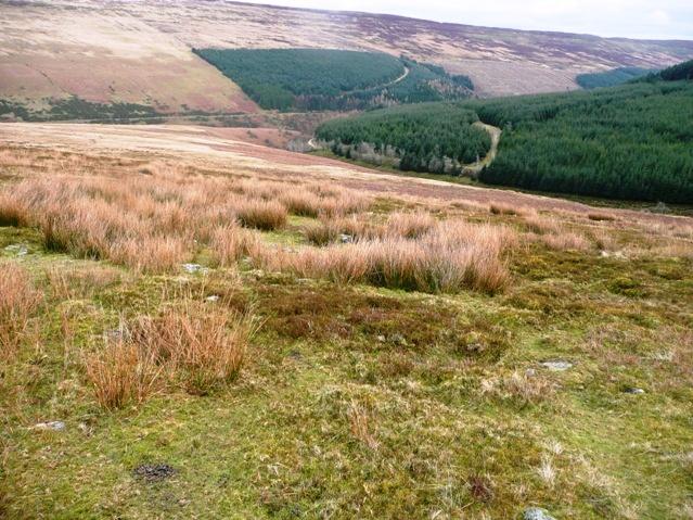 Towards Mynydd Du Forest