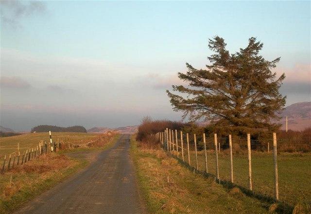 Roadside Tree Near Cluanach