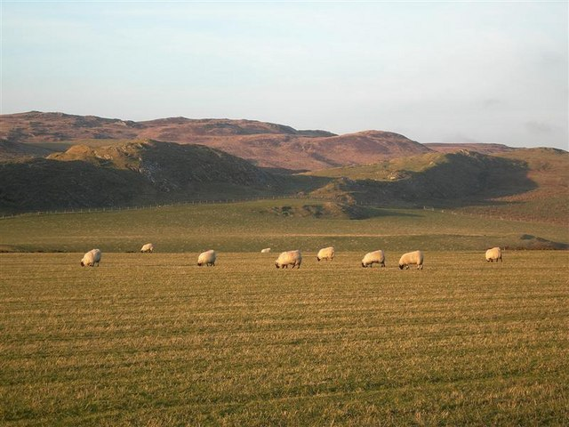 Sheep Near Cluanach