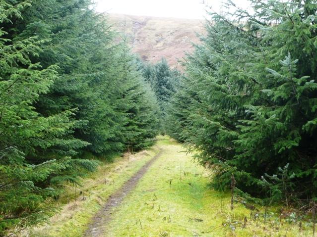 In Mynydd Du Forest