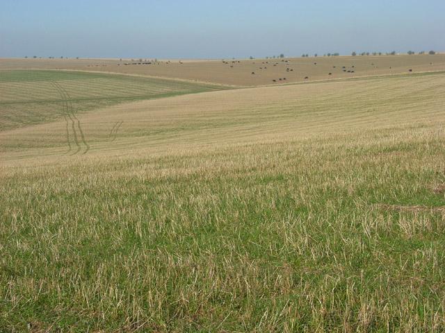 Farmland near Yarnbury Castle