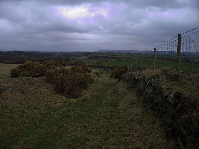 Grassy farm track near Penygraig farm