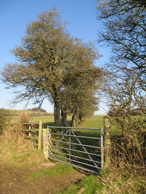 Gateway into field near Tallentire