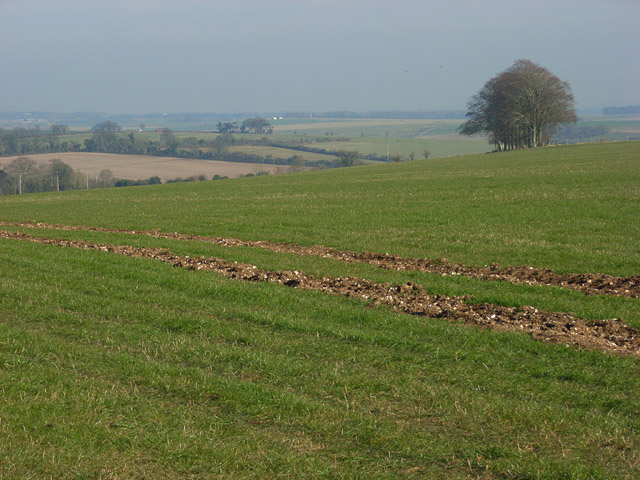 Farmland, Shrewton