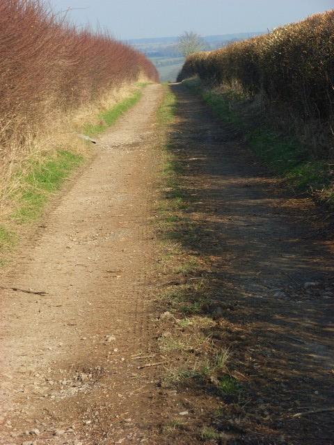 Farm track, Shrewton