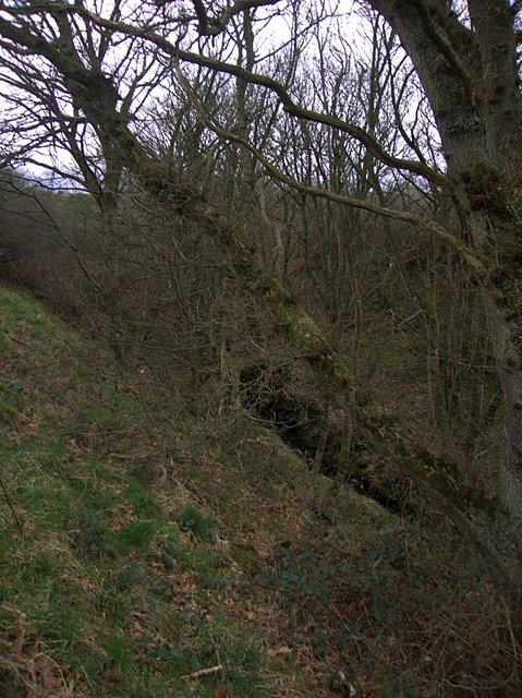 Stream near Gilfachau farm