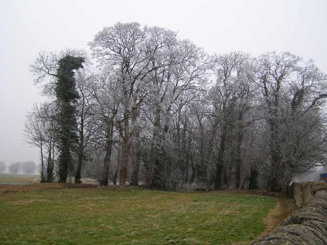 Rime encrusted trees in The Warren wood
