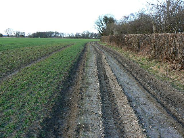 Field margin, near Old Ditcham