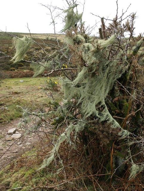 Moss near Codda Ford