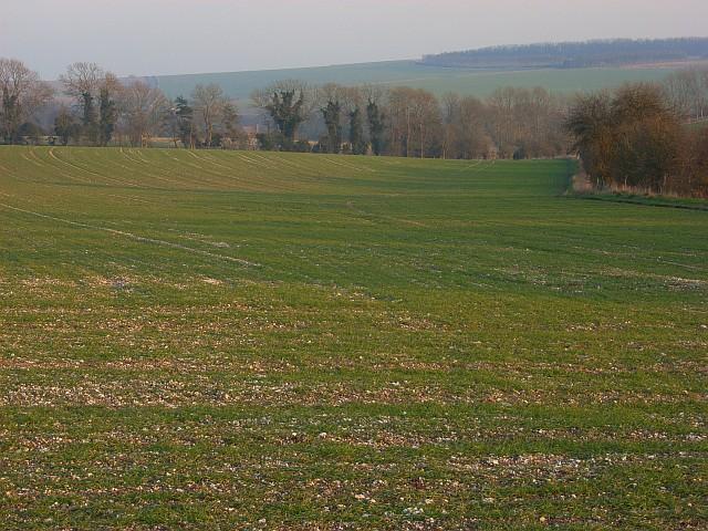 Farmland, Chitterne