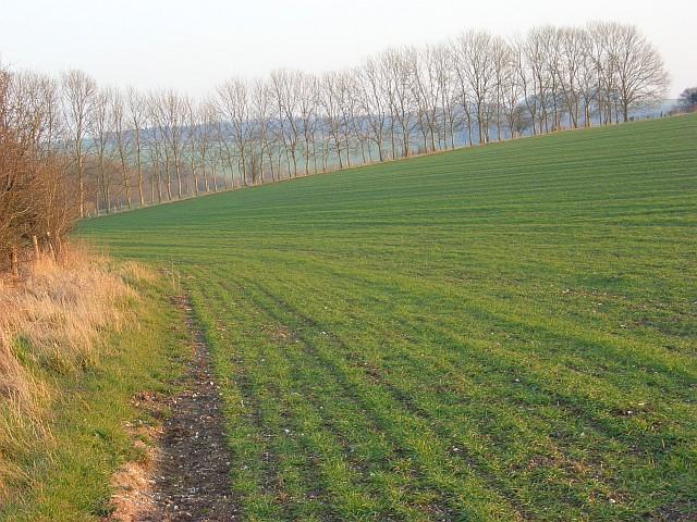 Farmland above Chitterne