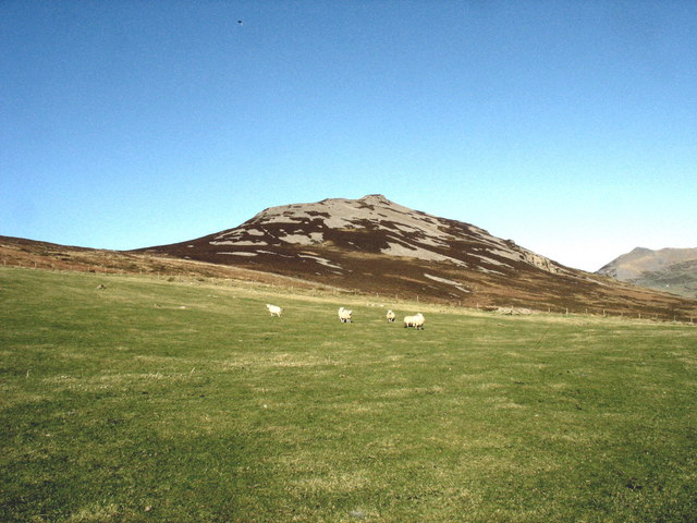 Sheep on intake land with Tre'r Ceiri in the background