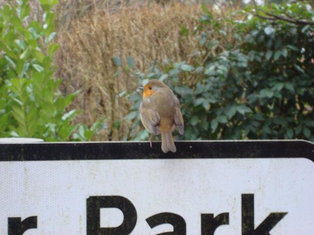 Robin, Malting Lane