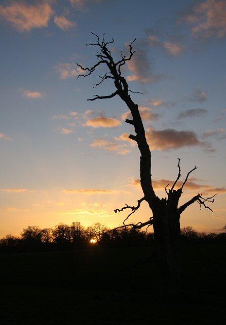 Dead tree silhouette in Ickworth Park