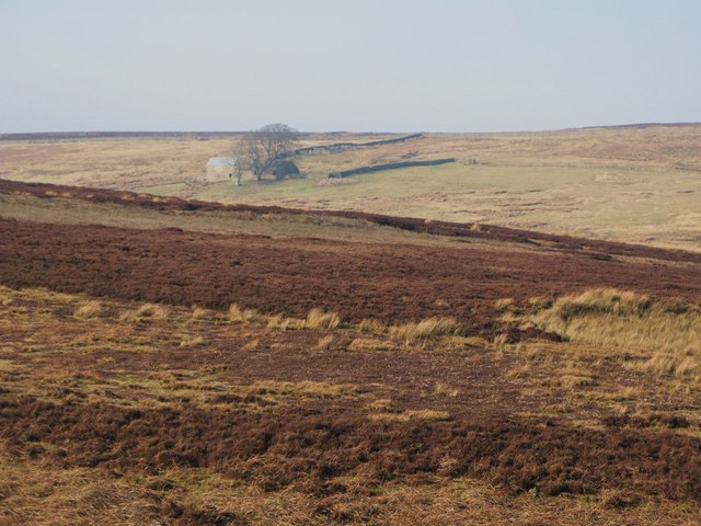 Moorland near Western Meadows