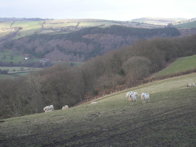 Sheep grazing on a hillside near Newcastle