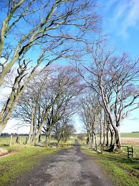 Tree-lined avenue to Craigendunton