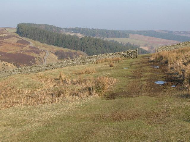 The track to Heatheryburn (2)