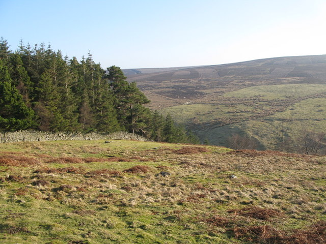Rough pastures and plantation above Beldon Burn