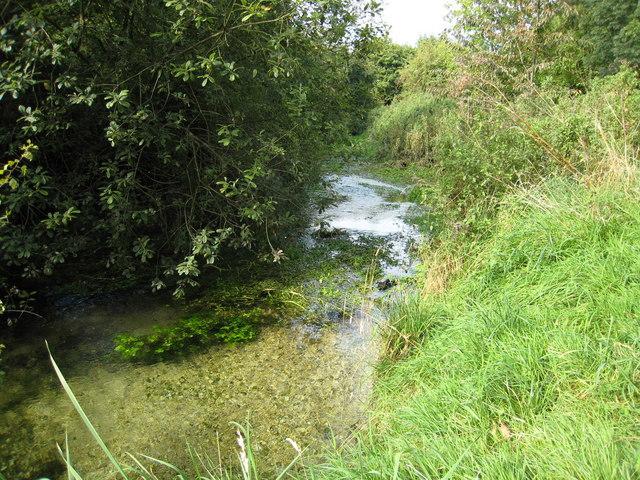 Juvenile Thames near Kemble