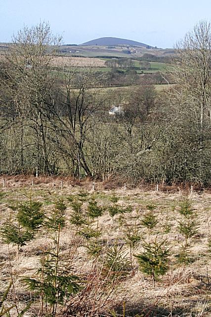 Woodland near Auchintoul