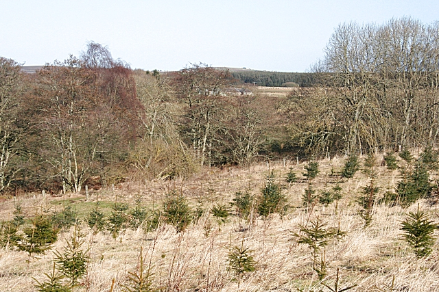 Cleanhill Wood