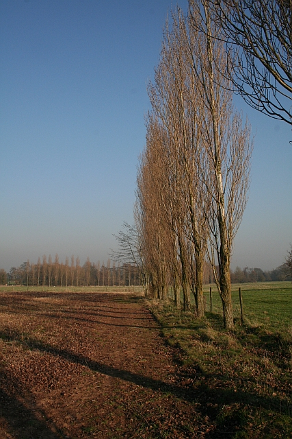Poplars, Birtsmorton