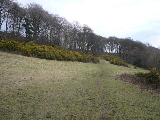 Footpath cuts across hillside near Stubbing