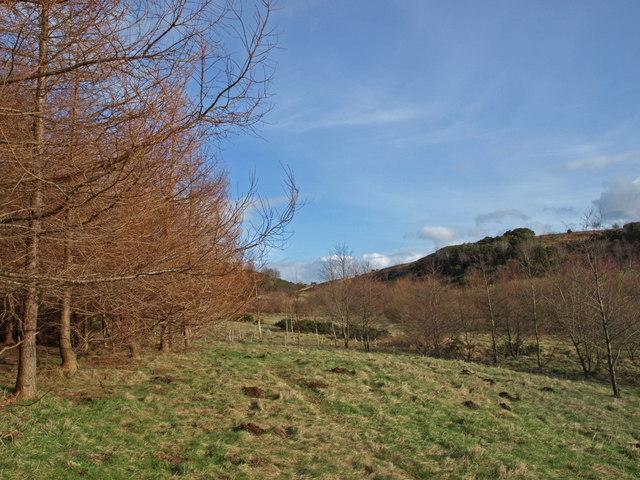 Larch wood boundary, Knapps Loch