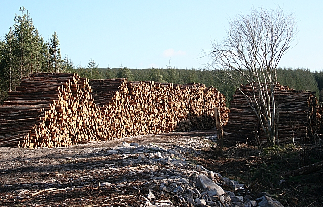 A Mountain of Logs