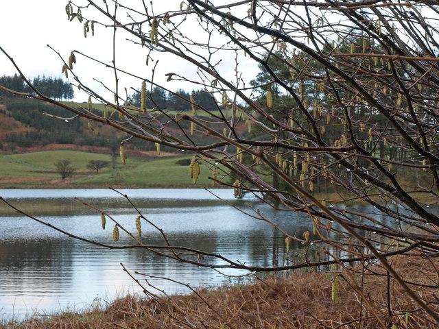 Catkins, Knapps Loch