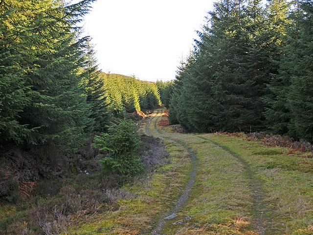 Forestry track in upper Glen Boltachan