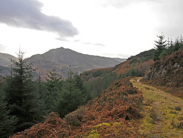 Forestry track near Creag Bhuidhe