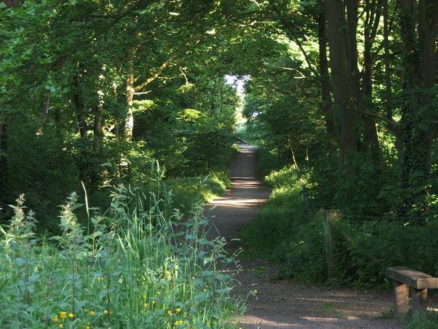 Waggonway in Summer