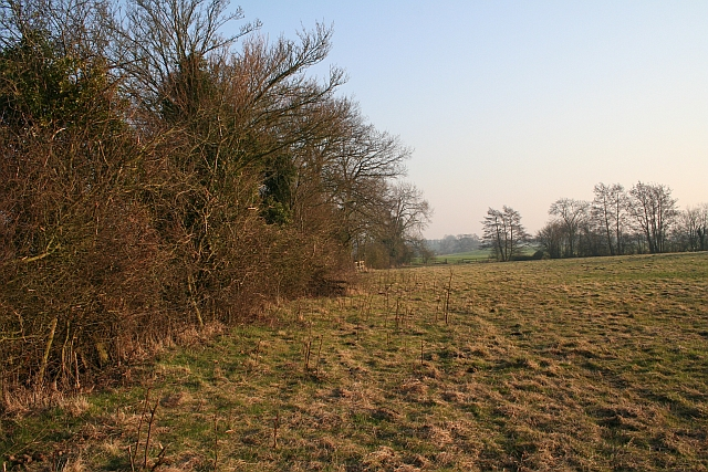 Hedge Runners
