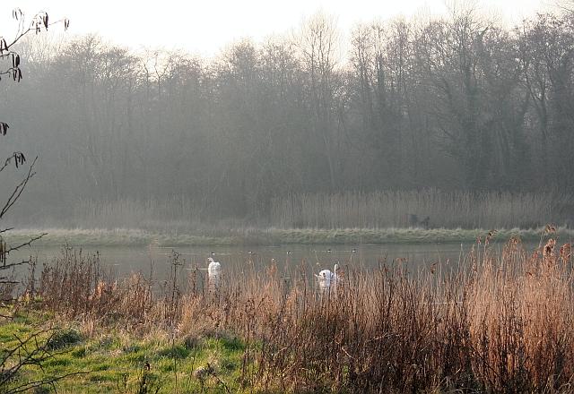 New Ponds