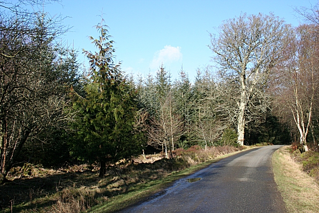 Cottown Wood