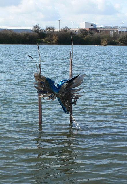 Kingfisher, Brickfields Pond