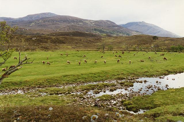 Deer grazing near Braulein Lodge