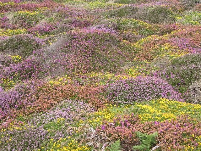 Clifftop Summer colour  Nanjulian
