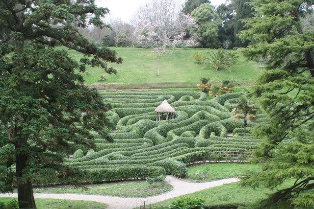 The maze at Glendurgan Garden Mawnan Smith