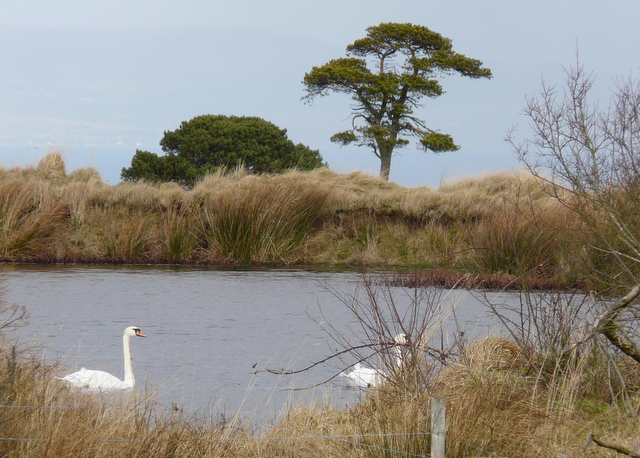 Pond on Nigg Hill